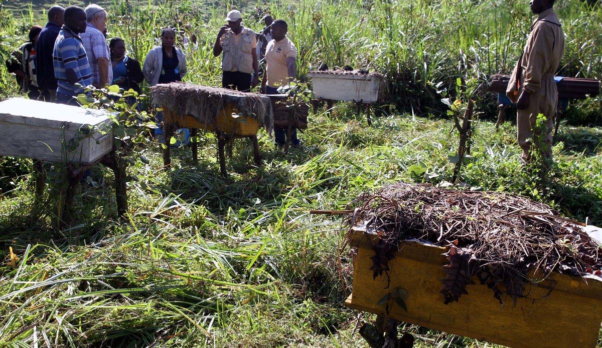 La MONUSCO facilite la réinsertion de plus de 200 ex-combattants et personnes vulnérables de Kitchanga. Photo MONNUSCO/Ado Abdou