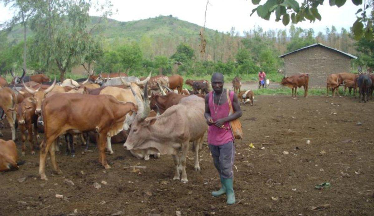 Au Sud-Kivu, la Monusco veut mettre fin aux conflits récurrents et violents créés par la transhumance.
