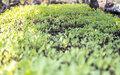 Nord-Kivu : la MONUSCO s'engage dans un projet de jardins potagers pour personnes vulnérables