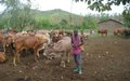 MONUSCO determined to put an end to transhumance-caused repeated and violent clashes in the South-Kivu province